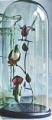 Cloche met Kolibri's 44,5 x 30 cm