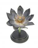 Botanische bloem waterlelie blauw 20,3x19,1cm