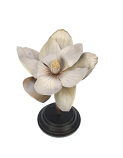 Botanische bloem magnolia crème