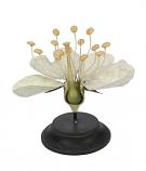 Botanische bloem wit 19x13cm