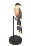 vogel met langestaart witte punten